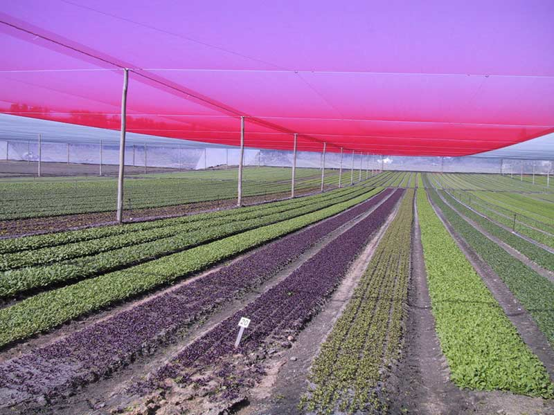 Crop Netting - canopies reducing crop stress