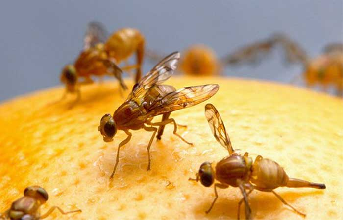 Fruit fly protection in your garden starts with Netpro Fruit fly Net