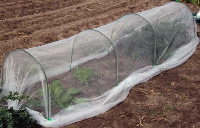Covering your patch with Vegenet, Shade Cloth Fruit Fly Net or Insect Screen